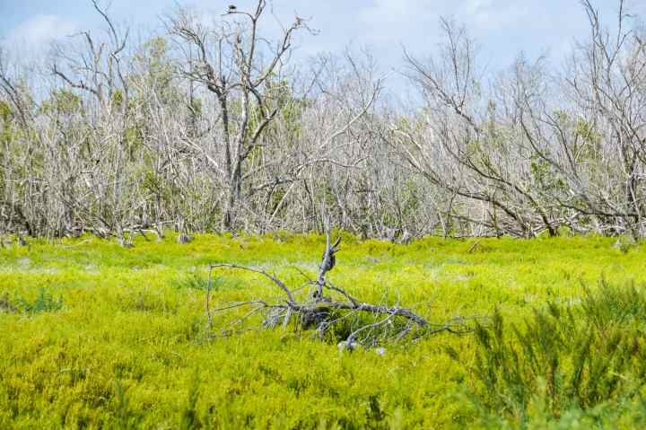 Mangroves ecosystem in Everglades National Park. This guide will tell you everything you need to know about your first visit | herlifeadventures.blog | #everglades #nationalpark #florida #travel #destinations