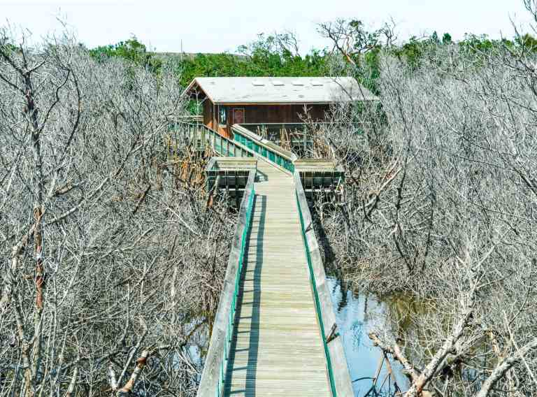 Long Key State Park Florida mangrove trail #traveltips #usdestinations #travelhacks #travelguide #adventuretravel #roadtrip #nationalpark #nationalparkroadtrip #travelpacking
