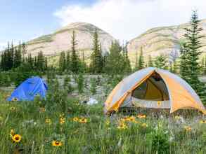 JASPER NATIONAL PARK CAMPING SNARING CAMPGROUND TENT IN FLOWER FIELD