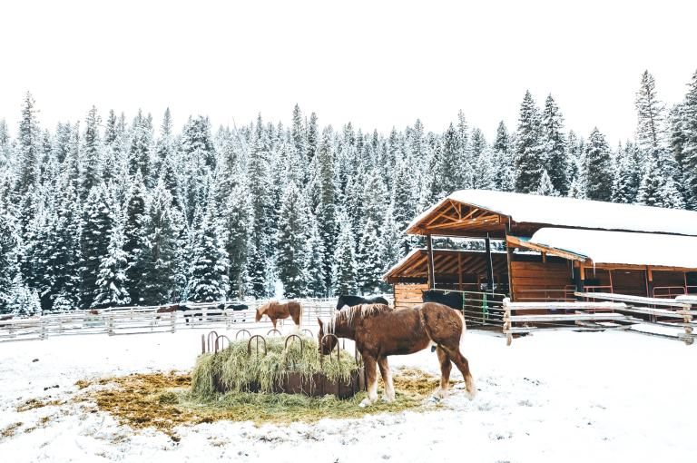 The adventure guide to Big Sky Montana in the winter. | herlifeadventures.blog | #traveldestinations #travelideas #northamericatravel #traveltips #usdestinations #travelhacks #travelguide #adventuretravel #roadtrip #bigsky #montana #adventureguide #winteractivities #wintertravel