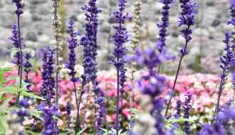 Visit the Botanical Gardens at Cranbrook National Historic Landmark #Michigan #traveldestinations #thingstodo #gardens