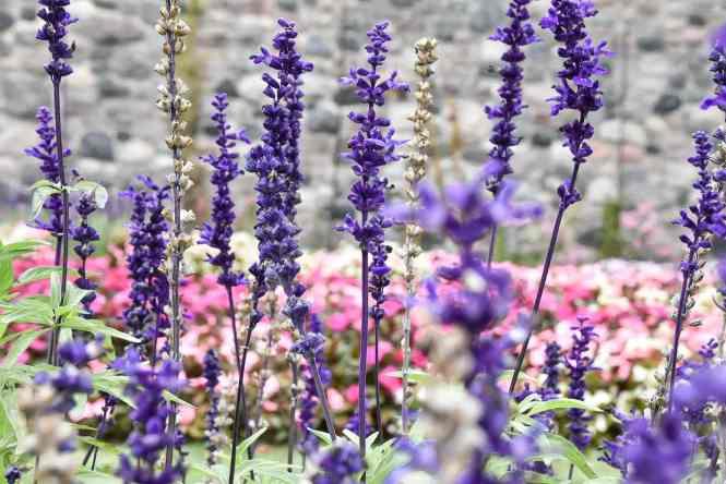 Sunken garden flowers at Botanical Gardens on the Cranbrook manor. #spring #flowers #bloom #thingstodo #michigan
