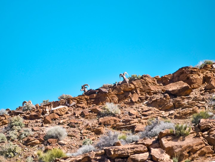 Wildlife sightings and more in this adventure itinerary will provide you all the information you need for your visit to Valley of Fire State Park in Nevada. The best hikes, what to do, where to stay, tours, how to get there and more! | #nevadatravel #nevadaroadtrip #valleyoffire #statepark #photos #hiking #camping #photography