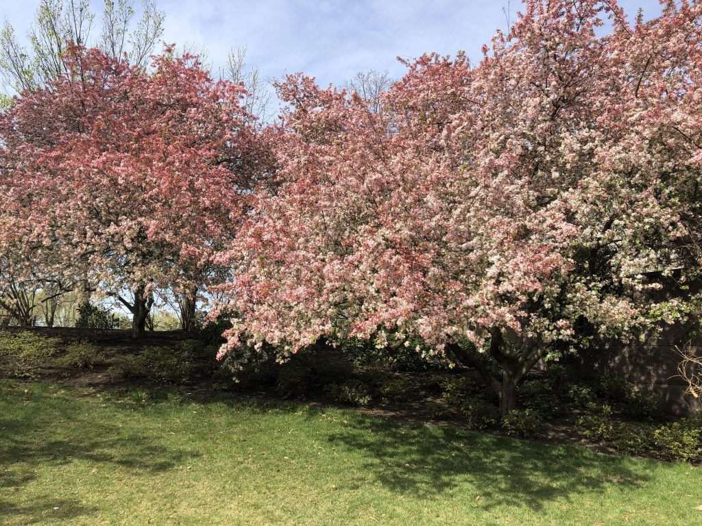 The Cherry Blossom Festival, Washington, D.C.
