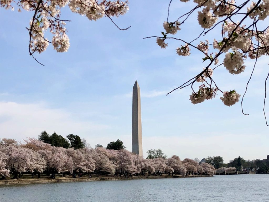 The Cherry Blossoms at the Tidal Basin in Washington, D.C. | 2018 Year in Review