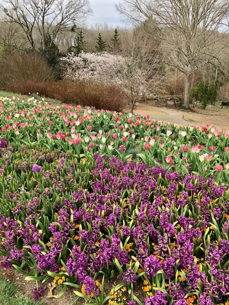 A vibrant garden at Cheekwood in Bloom | Her Life in Ruins