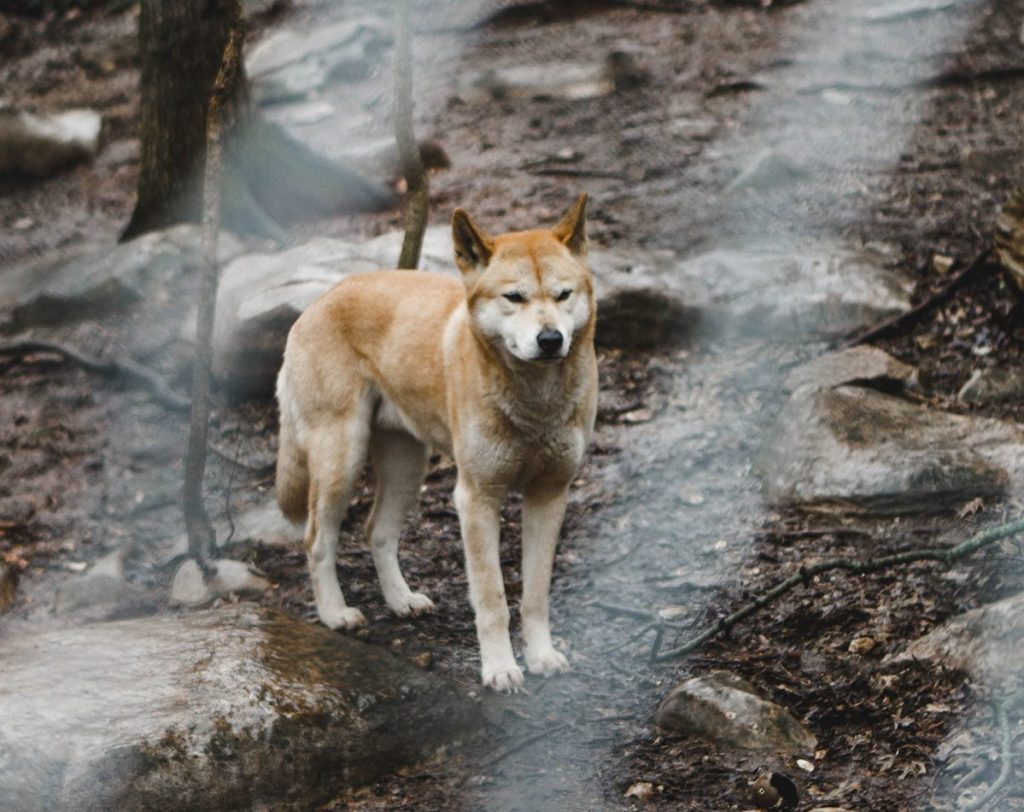 Her Life in Ruins   An Adventure at Kentucky Down Under - Dingos