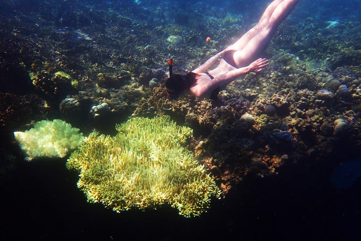 Bali Trip | Snorkeling in Menjangan Island