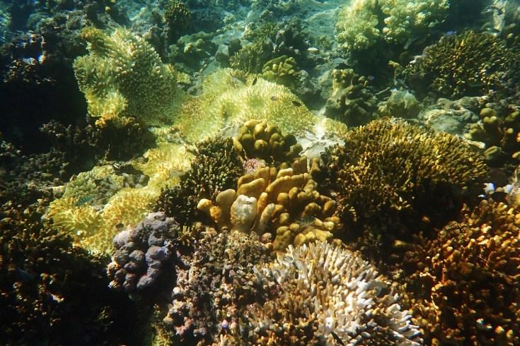 Snorkeling in Menjangan Island Bali 5