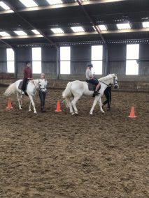 paard 2