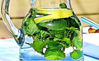 Citronmeliss en lättodlad medicinalväxt