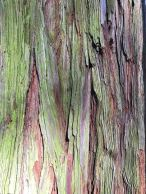 Redwood bark