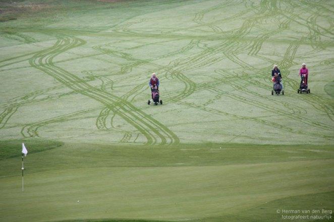 Golf-ladies