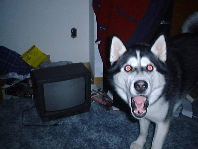 Shocked dog
