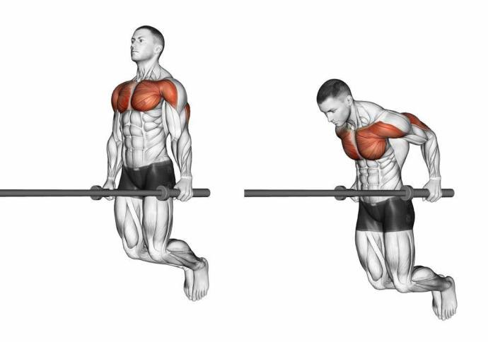 what muscles do dips work