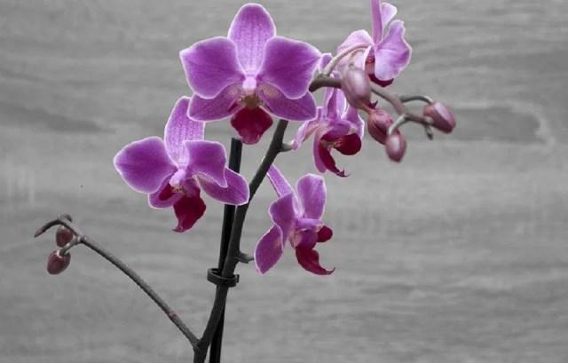 L'orchidée, la star des plantes artificielles à fleurs