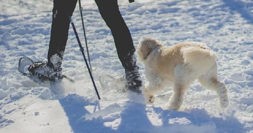 les pieds au chaud avec les chaussures pour raquettes à neige