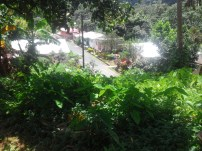 A view of Uriahs Victors childhood neighborhood,, small houses surrounded by jungle