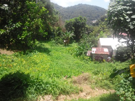 A vew from Uriahs Victor's childhood home, a shed and barn nestled in the jungle