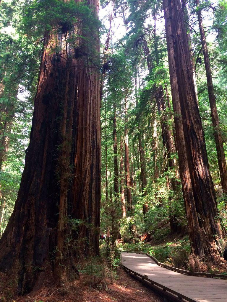 muir woods visit