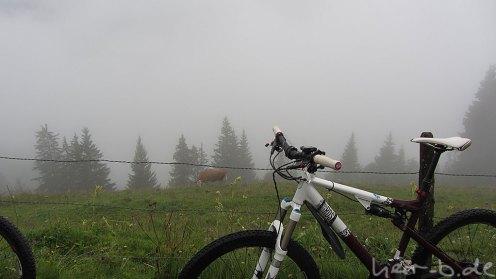 Jabba und Kuh im Regen.