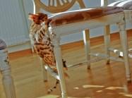 Ett smidigt hopp upp på en stol