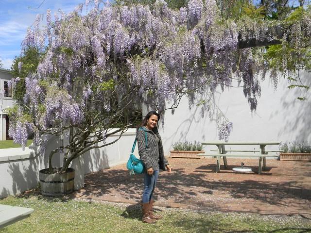 L'Avinir Stellenbosch