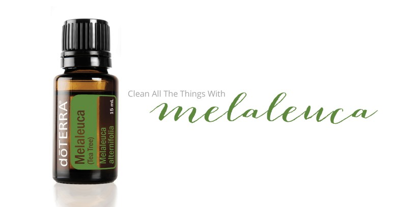 Essential Oils Melaleuca