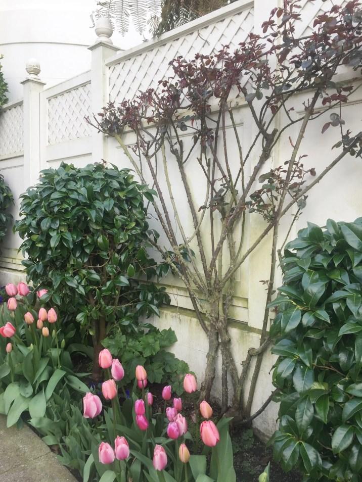 Tulips_Sidewalk
