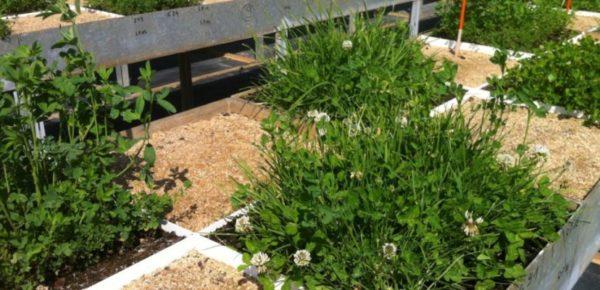 L'agriculture manipulée par les semenciers