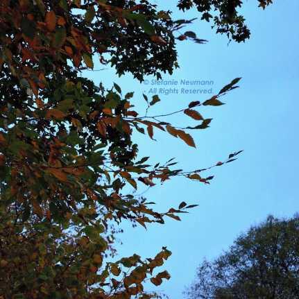Autumn Colours © Stefanie Neumann - All Rights Reserved.