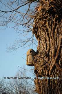 Bird Home © Stefanie Neumann - All Rights Reserved