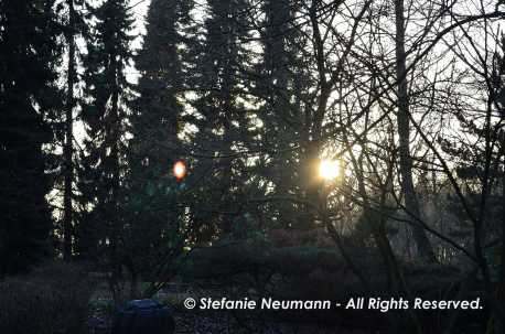 Sun-Day © Stefanie Neumann - All Rights Reserved.
