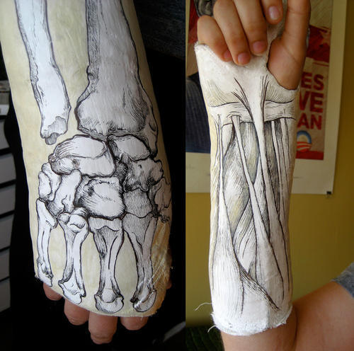 Anatomical Cast Illustrations