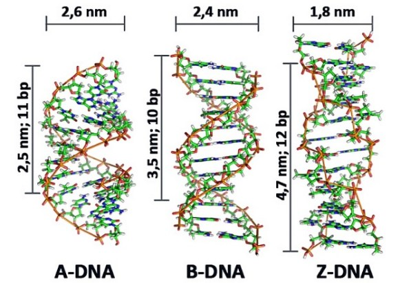 https://www.hesch.ch/images/sampledata/KONF-DNA.jpg