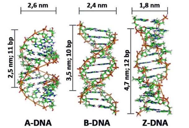 http://www.hesch.ch/images/sampledata/KONF-DNA.jpg