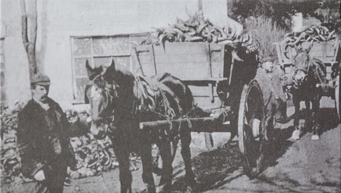abbeyhorn history