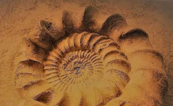 Ammonit Bed & Wine in Hessigheim