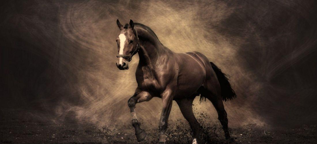 Ikke mange oplever magien i The Golden Joy Zone med hesten… Men muligheden for at blive fyldt op af glæde, kærlighed & liv er iboende os alle!
