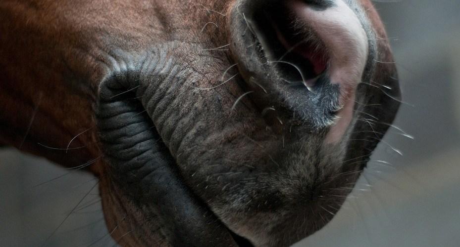 Spiritualitet: De dumme problemer imellem dig og din hest har ALT at lære dig!