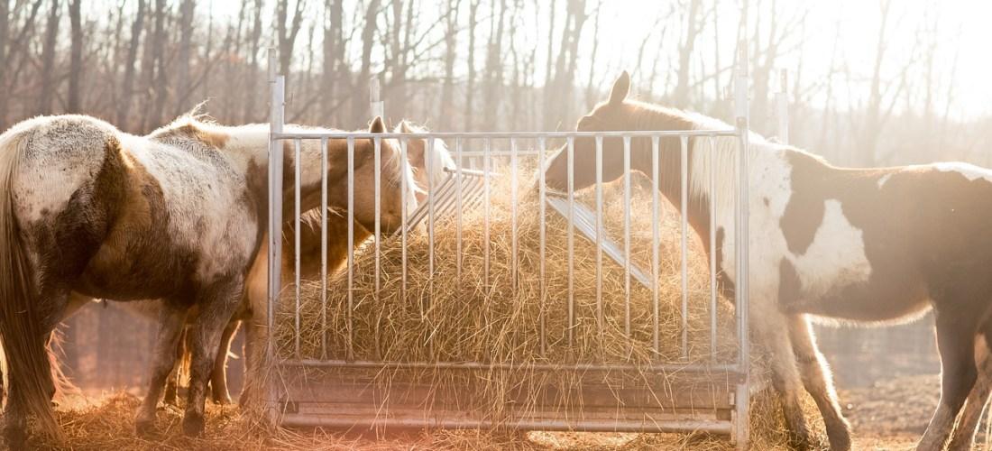 Få IDAG Hestens Manual og de 11 nøgler – Værsgo 50 minutters gratis foredrag til dig om intuition i arbejdet med heste!