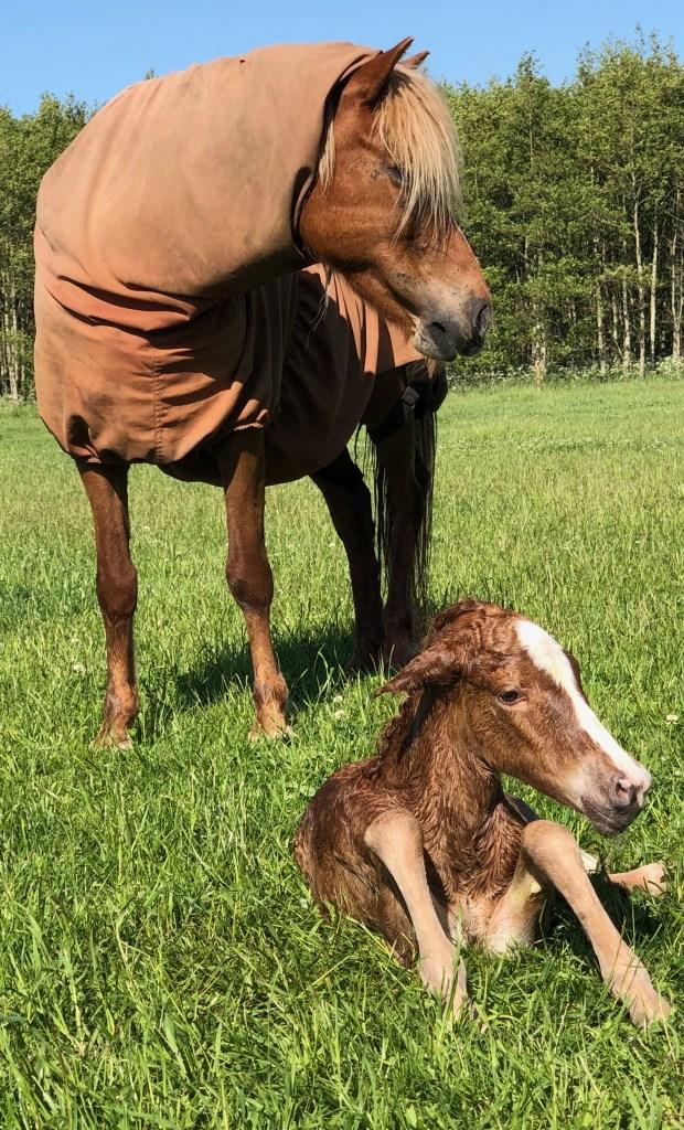 Vaccine Mod Sommereksem Hestepraksis Nord