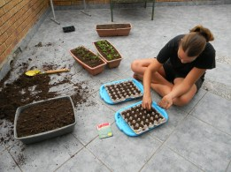 Sowing butternuts and broccoli