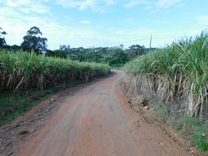 River Sand Road winding through the cane fields