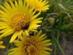 Wildflowers - Lake Eland Nature Reserve