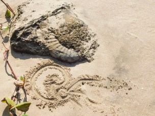 Drawing of ammonite in the sand
