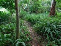 Bendigo Nature Reserve hiking trail1