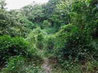 Bendigo Nature Reserve hiking trail2