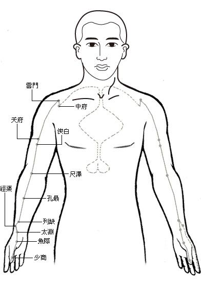 「肺經」的圖片搜尋結果