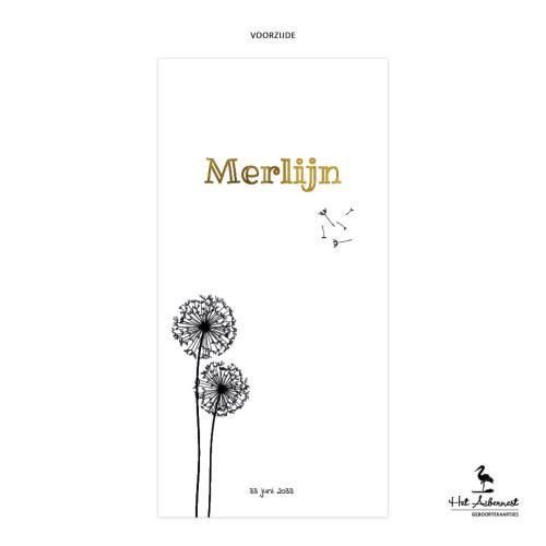 Merlijn_web-vz